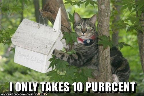 cat memes - 9606758144