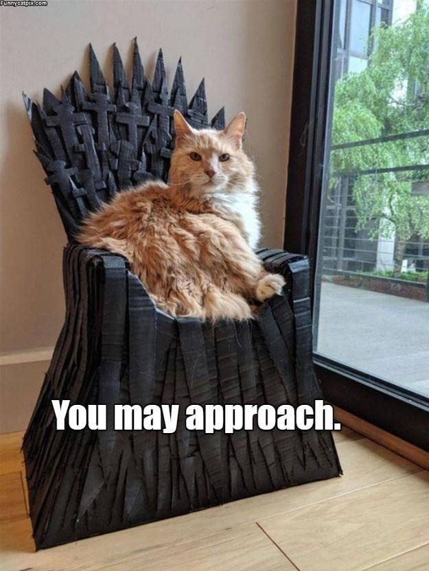 cat memes - 9606759424