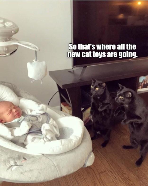 cat memes - 9606760704