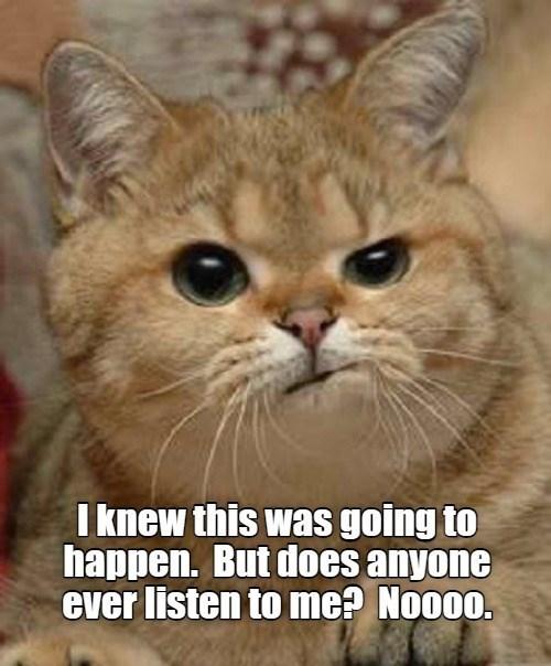 cat memes - 9606760960