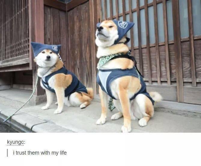 Dog - kyungc: i trust them with my life