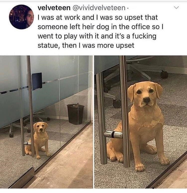 Dog - velveteen @vividvelveteen · I was at work and I was so upset that someone left heir dog in the office so I went to play with it and it's a fucking statue, then I was more upset