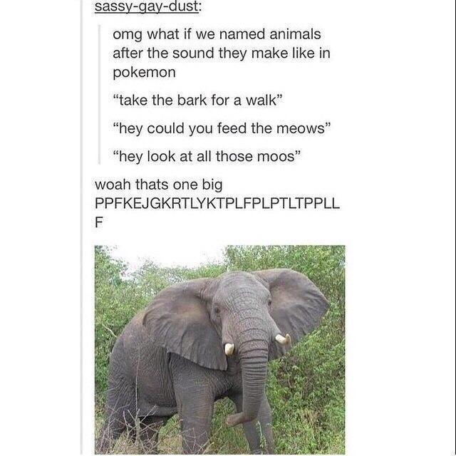 """Plant - sassy-gay-dust: omg what if we named animals after the sound they make like in pokemon """"take the bark for a walk"""" """"hey could you feed the meows"""" """"hey look at all those moos"""" woah thats one big PPFKEJGKRTLYKTPLFPLPTLTPPLL F"""