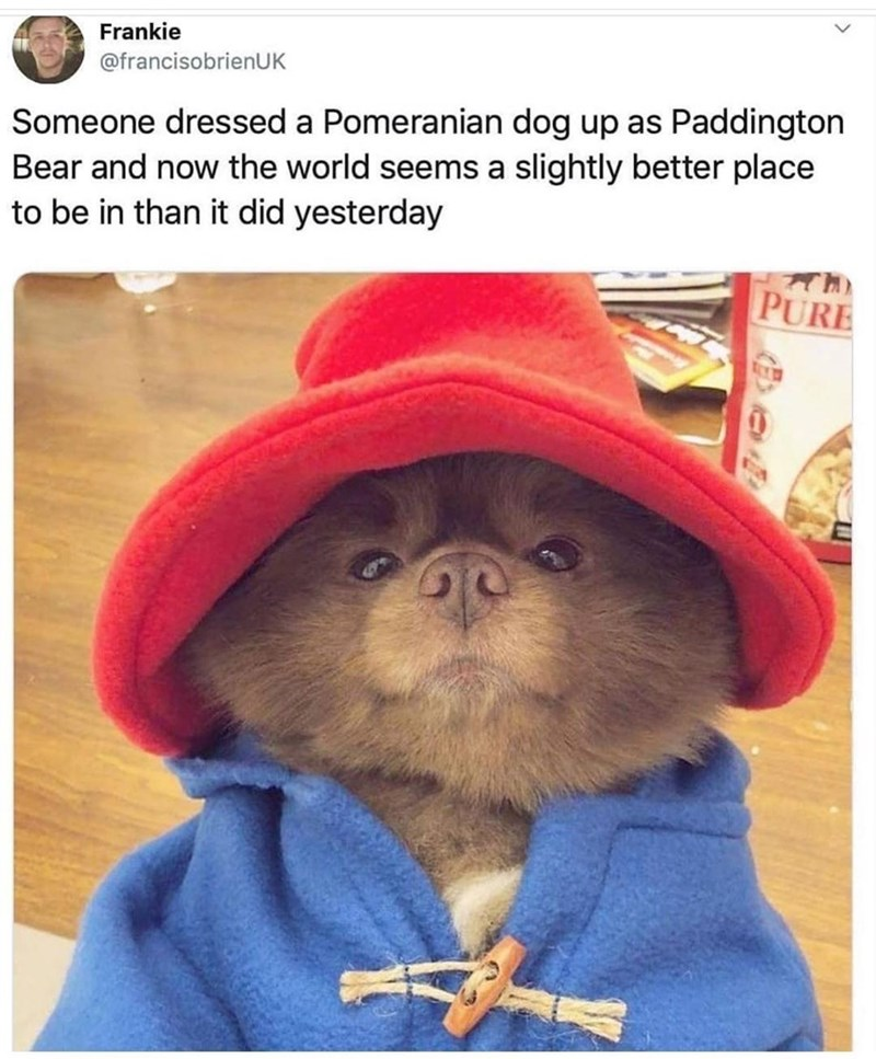Glasses - Frankie @francisobrienUK Someone dressed a Pomeranian dog up as Paddington Bear and now the world seems a slightly better place to be in than it did yesterday PURE