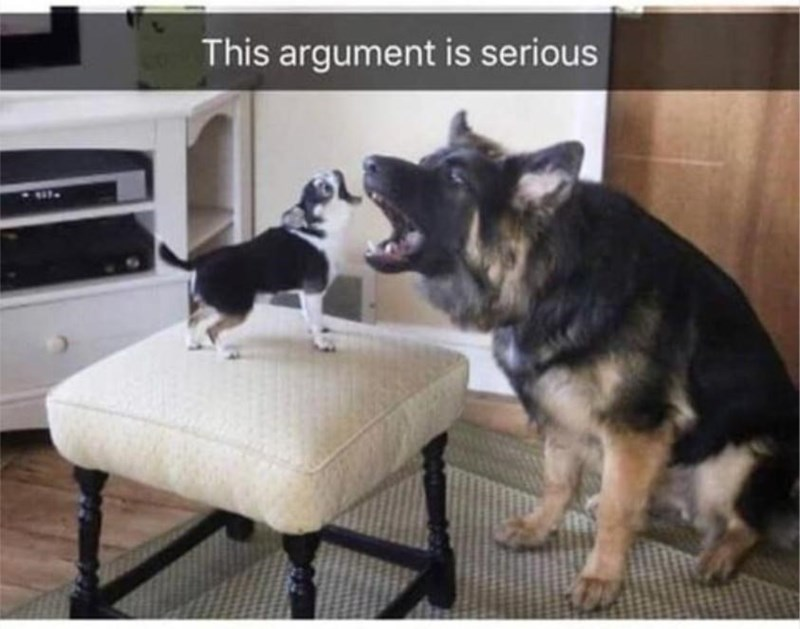 Dog - This argument is serious