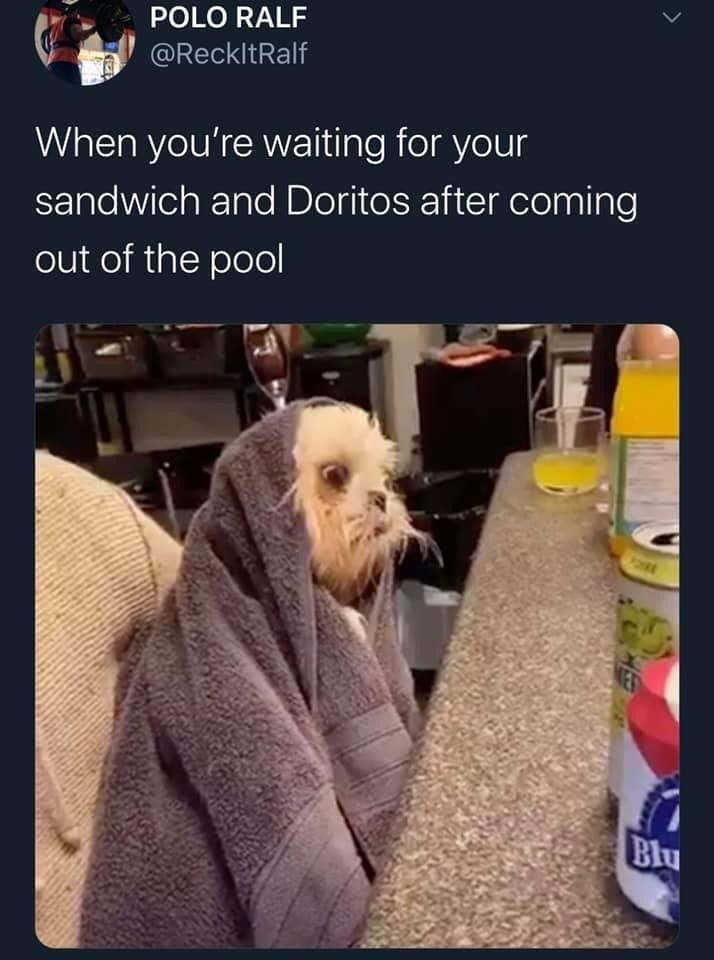 Dog - POLO RALF @ReckltRalf When you're waiting for your sandwich and Doritos after coming out of the pool Blu
