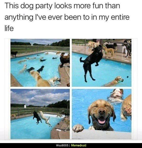 Water - This dog party looks more fun than anything I've ever been to in my entire life Woz8005   Memedroid