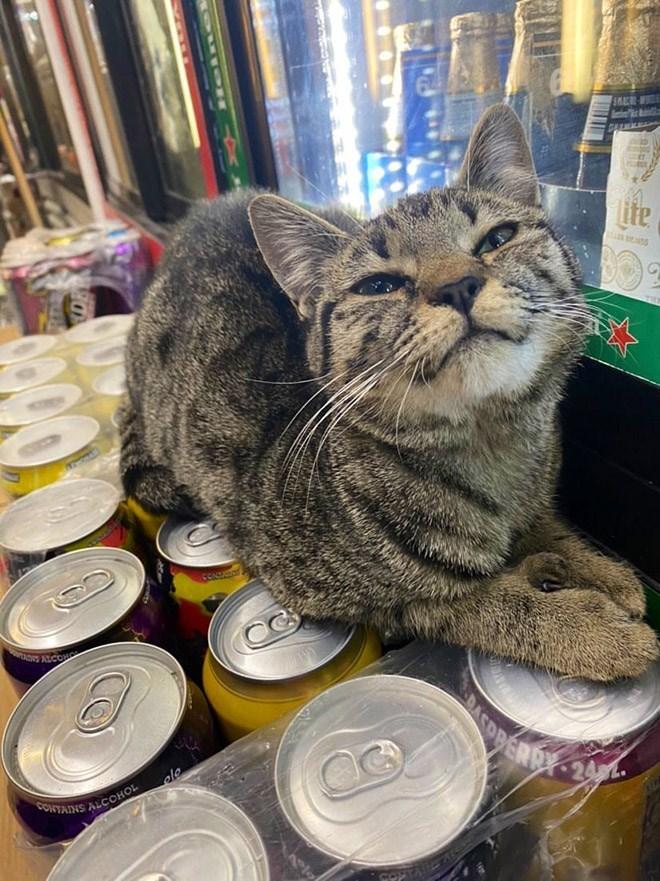 Cat - ite TRE CON TA ALCON PERR 24. CONTAINS ALCOOHOL Heln el 144