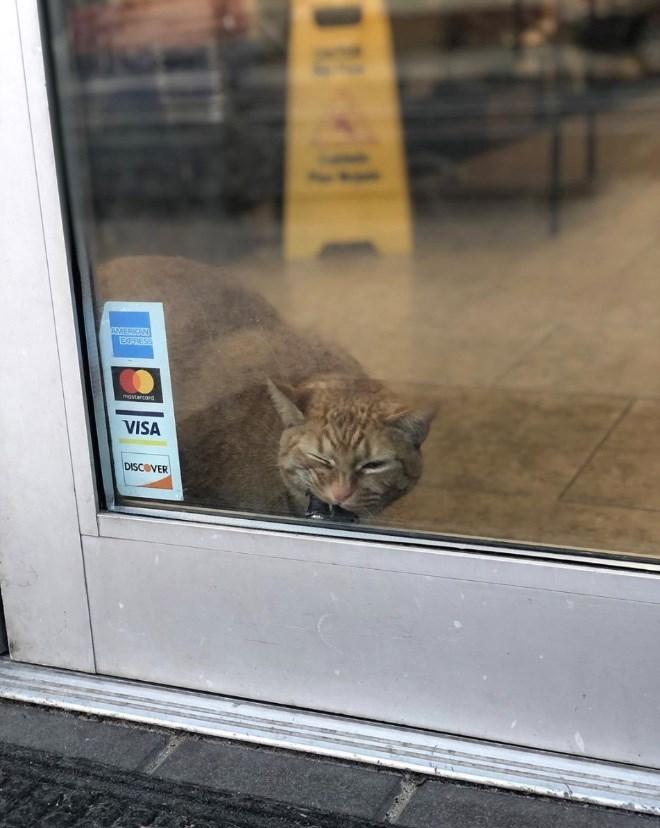 Cat - AMERKAN EXPASS mastarcard VISA DISCOVER