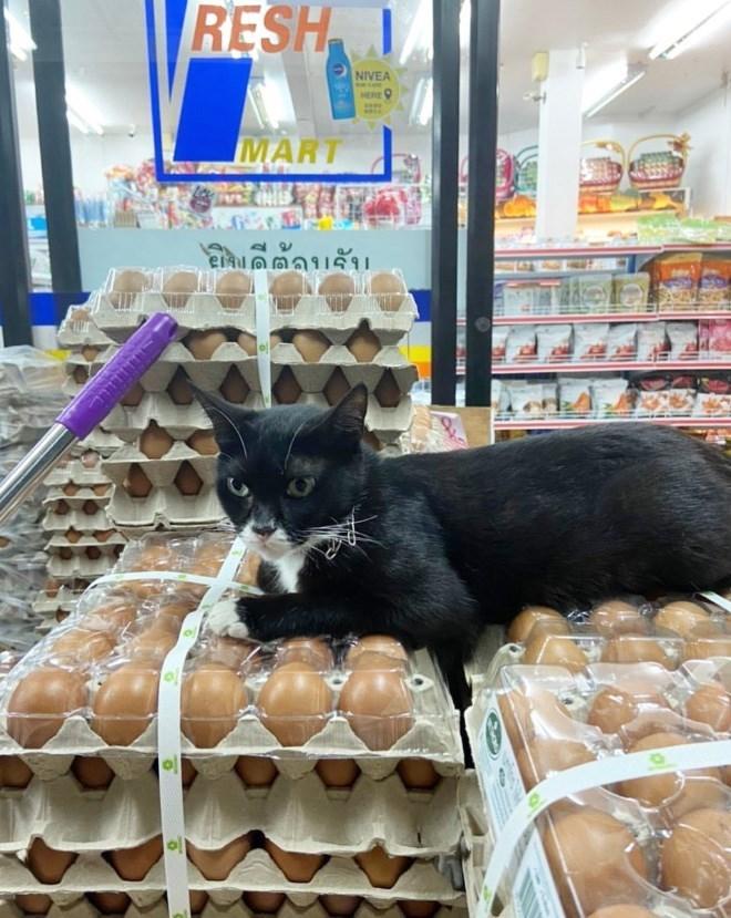 Cat - RESH NIVEA HERE MART
