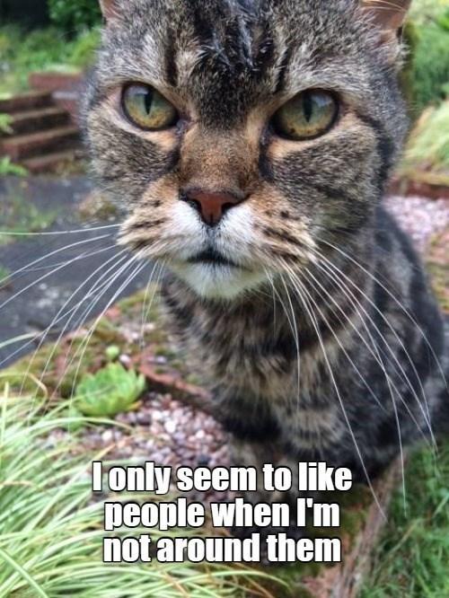 cat memes - 9607409152