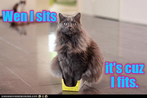 cat memes - 9607409920