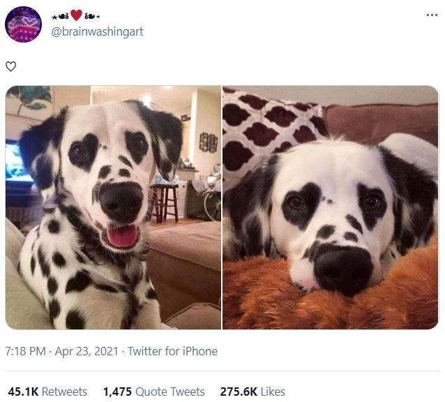 Dog - ... @brainwashingart 7:18 PM : Apr 23, 2021 - Twitter for iPhone 45.1K Retweets 1,475 Quote Tweets 275.6K Likes