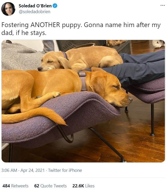 Dog - Soledad O'Brien @soledadobrien Fostering ANOTHER puppy. Gonna name him after my dad, if he stays. 3:06 AM · Apr 24, 2021 Twitter for iPhone 484 Retweets 62 Quote Tweets 22.6K Likes