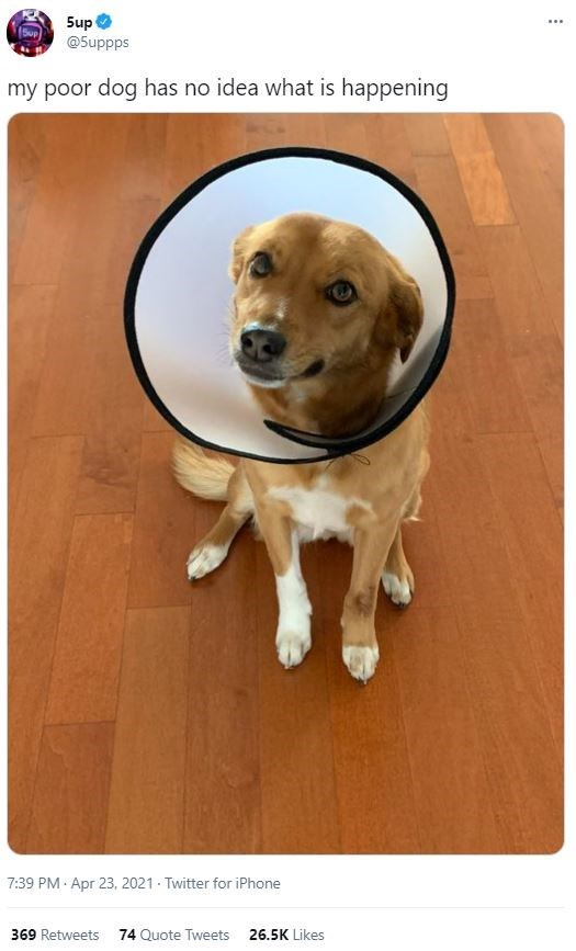 Dog - 5up @5uppps ... my poor dog has no idea what is happening 7:39 PM · Apr 23, 2021 Twitter for iPhone 369 Retweets 74 Quote Tweets 26.5K Likes