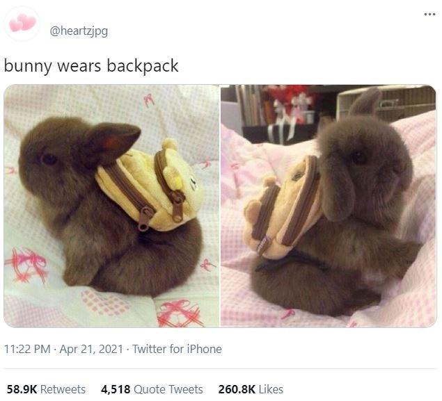 Brown - ... @heartzjpg bunny wears backpack 11:22 PM · Apr 21, 2021 - Twitter for iPhone 58.9K Retweets 4,518 Quote Tweets 260.8K Likes