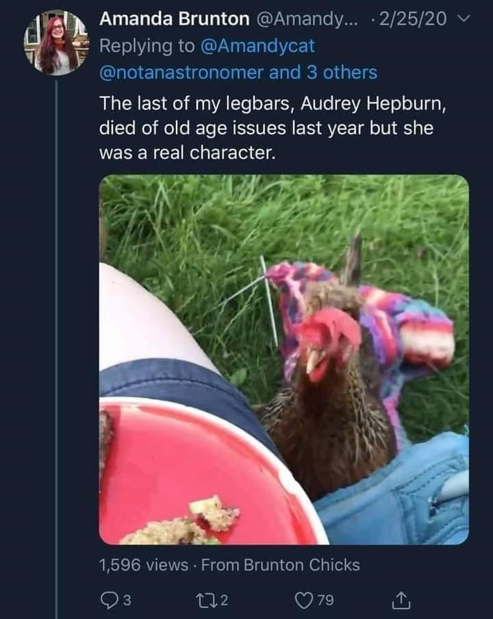 Vertebrate - Amanda Brunton @Amandy... · 2/25/20 Replying to @Amandycat @notanastronomer and 3 others The last of my legbars, Audrey Hepburn, died of old age issues last year but she was a real character. 1,596 views From Brunton Chicks 272 79