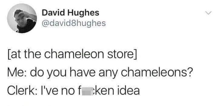 Font - David Hughes @david8hughes [at the chameleon store] Me: do you have any chameleons? Clerk: I've no fcken idea