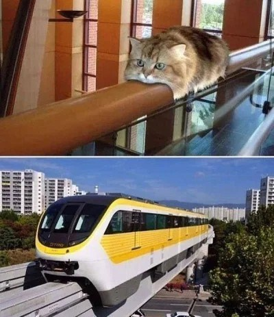 cat memes - 9607838464