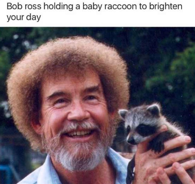 Smile - Bob ross holding a baby raccoon to brighten your day