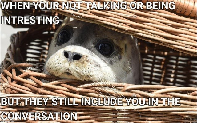 Dog - WHEN YOUR NOT TALKING OR BEING INTRESTING BUT THEY STILL INCLUDE YOU IN THE CONVERSATION Memagantink