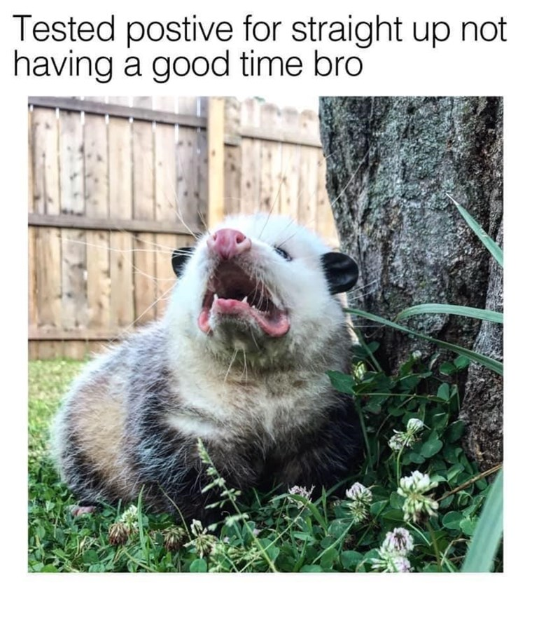 Dog - Tested postive for straight up not having a good time bro