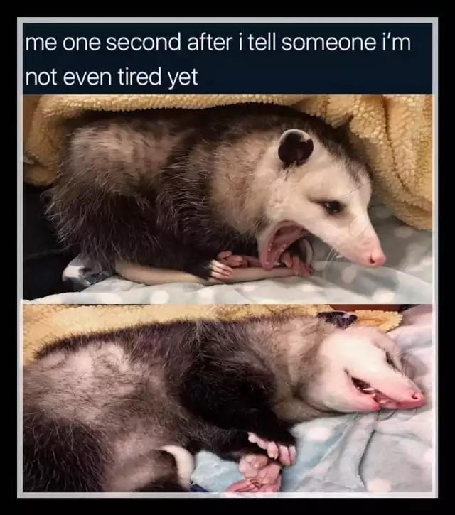 Vertebrate - me one second after i tell someone i'm not even tired yet