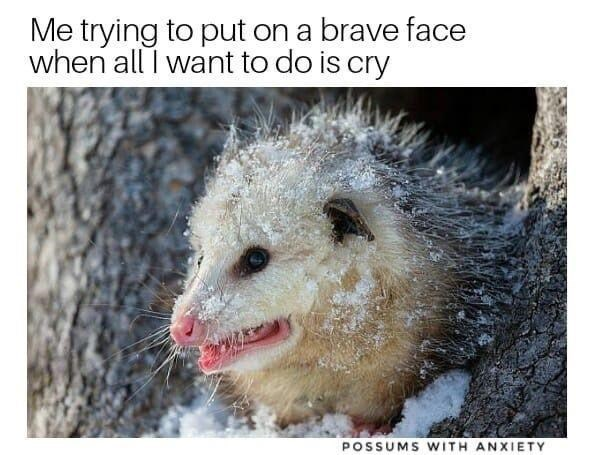 Nature - Me trying to put on a brave face when all I want to do is cry POSSUMS WITH ANXIETY