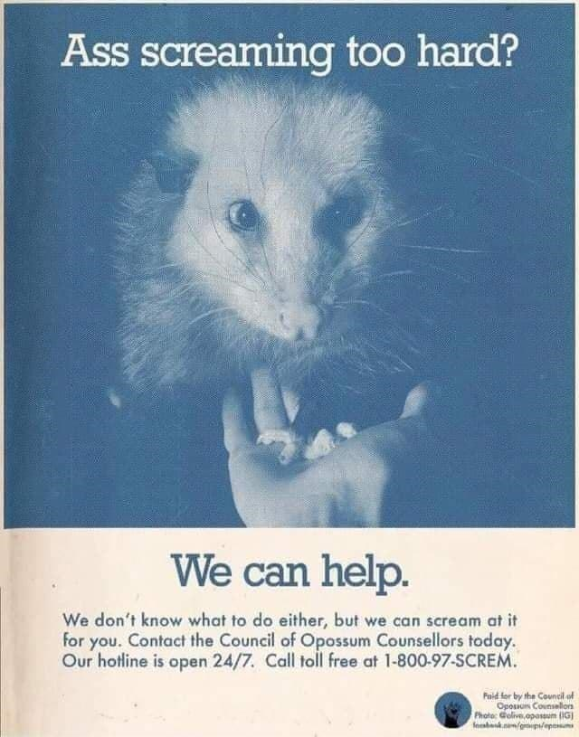 Iris - Ass screaming too hard? We can help. We don't know what to do either, but we can scream at it for you. Contact the Council of Opossum Counsellors today. Our hotline is open 24/7. Call toll free at 1-800-97-SCREM. Faid for by the Council of Oposun Counsallon Photo: Golive,opassum (IG)