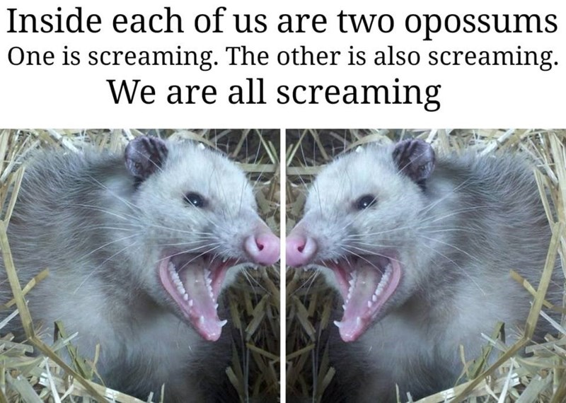 Photograph - Inside each of us are two opossums One is screaming. The other is also screaming. We are all screaming