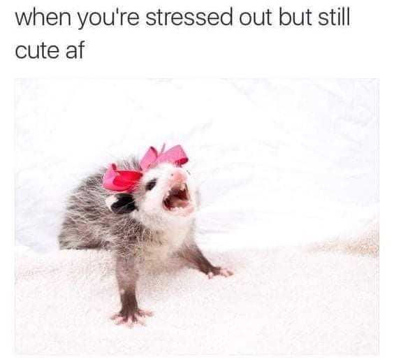 Organism - when you're stressed out but still cute af