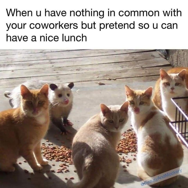 Cat - When u have nothing in common with your coworkers but pretend so u can have a nice lunch @BeautyAndMockery