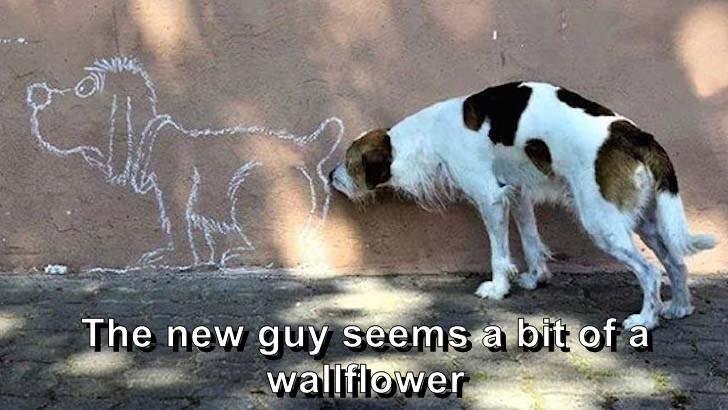 dog memes - 9608384512