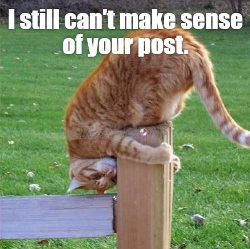 cat memes - 9608384768