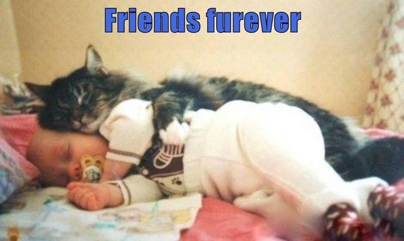 cat memes - 9608386816