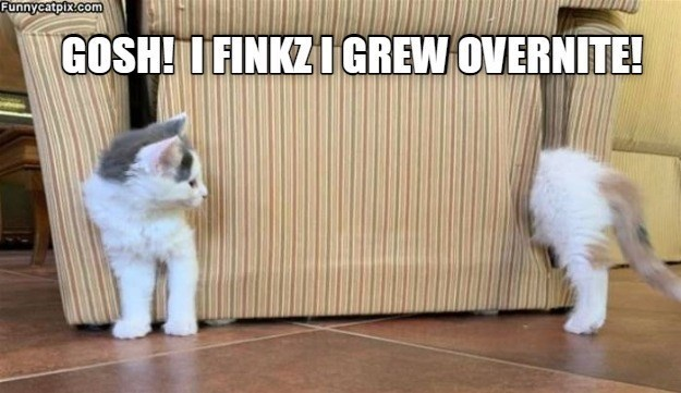 cat memes - 9608387072