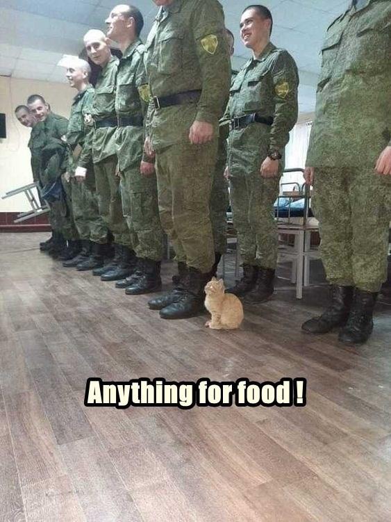 cat memes - 9608665600