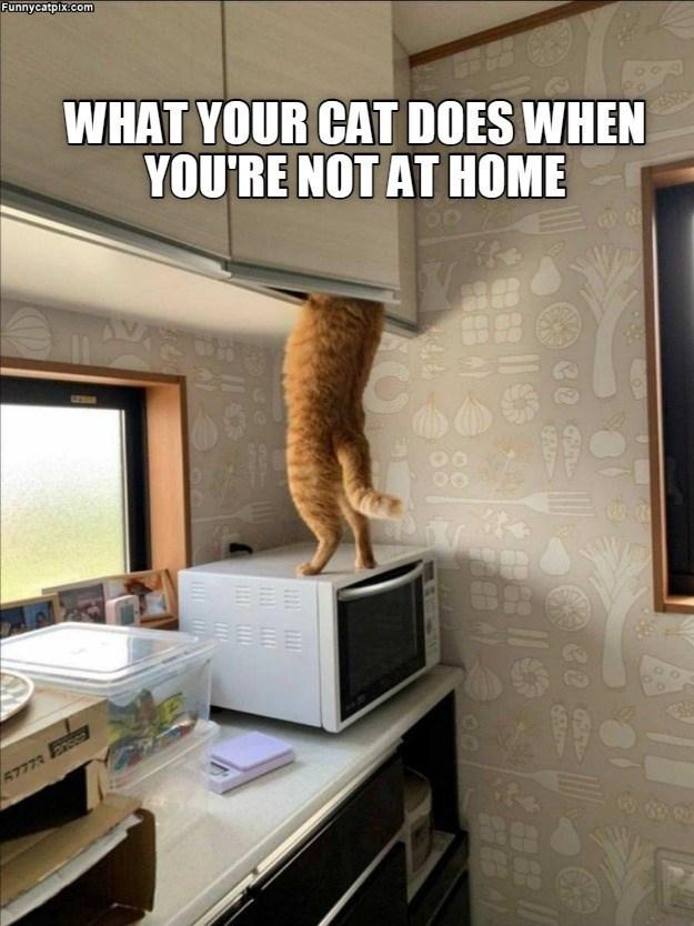 cat memes - 9608666112