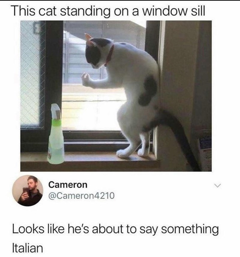 Organism - This cat standing on a window sll Cameron @Cameron4210 Looks like he's about to say something Italian