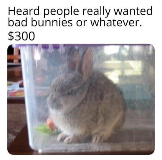 Rabbit - Heard people really wanted bad bunnies or whatever. $300