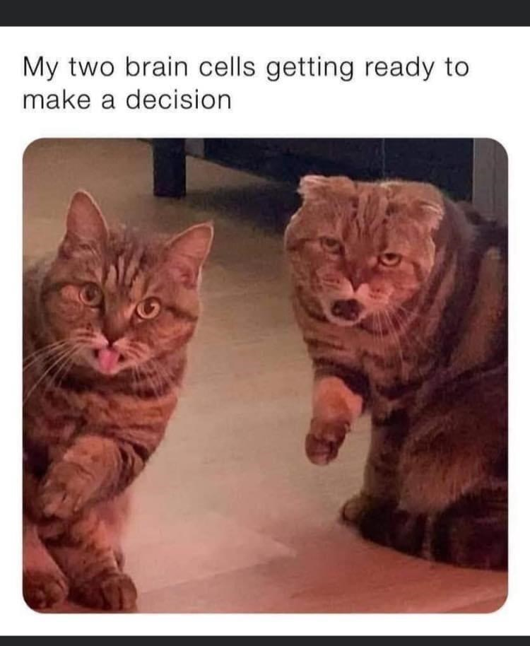 Brown - My two brain cells getting ready to make a decision