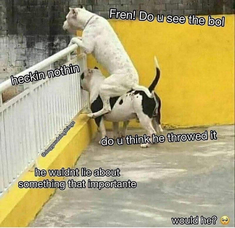 Dog breed - Fren! Do u see the bol heckin nothin do u think he throwed it he wuldnt lie about something that importante would he?