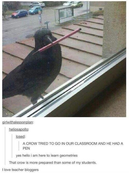Bumper - girlwithalessonplan: heliosapollo: losed: A CROW TRIED TO GO IN OUR CLASSROOM AND HE HAD A PEN yes hello i am here to learn geometries That crow is more prepared than some of my students. I love teacher bloggers