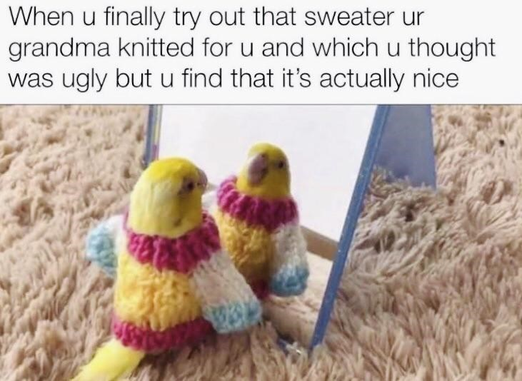 Bird - When u finally try out that sweater ur grandma knitted for u and which u thought was ugly but u find that it's actually nice