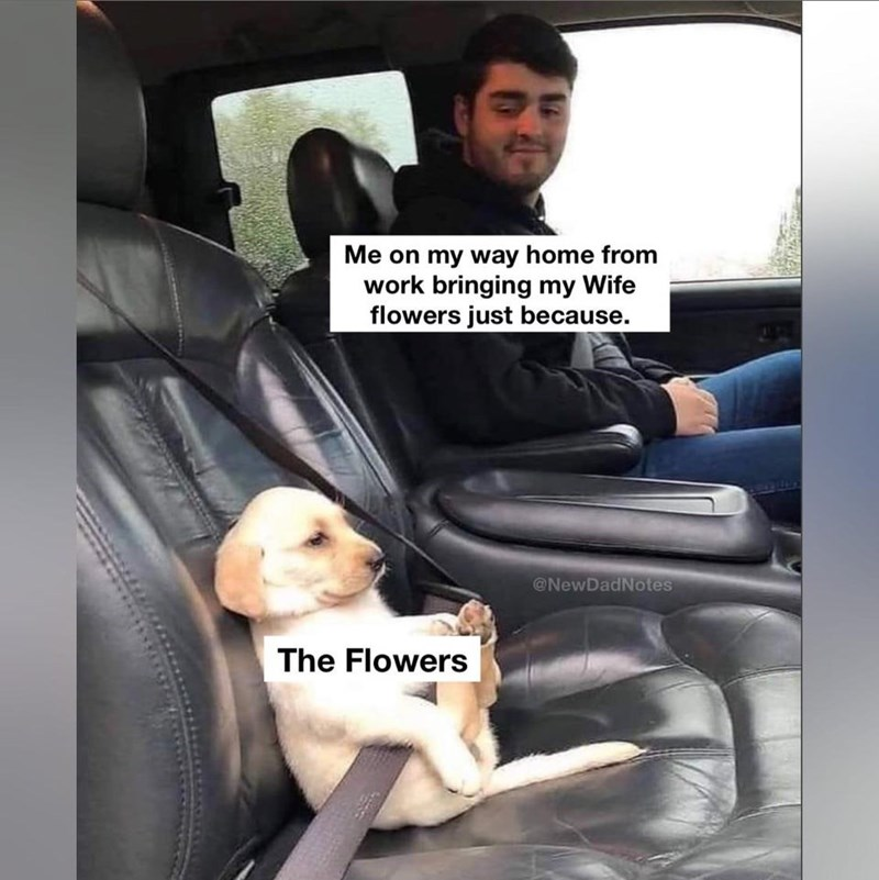 Dog - Me on my way home from work bringing my Wife flowers just because. @NewDadNotes The Flowers