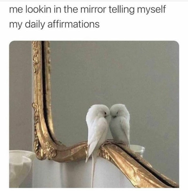 Bird - me lookin in the mirror telling myself my daily affirmations
