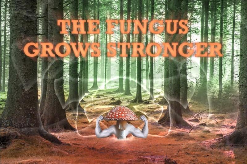 Plant community - THE FUNGUS GROW STRONGER 709 影