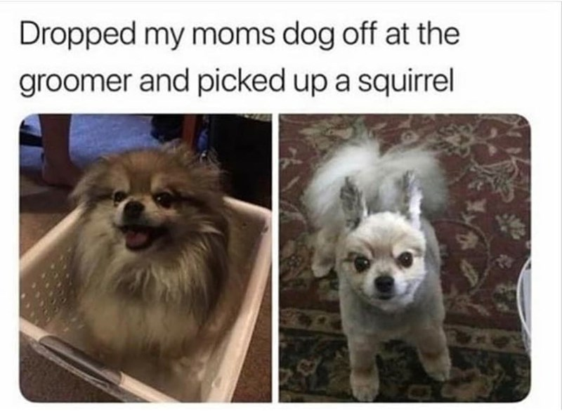 Dog - Dropped my moms dog off at the groomer and picked up a squirrel