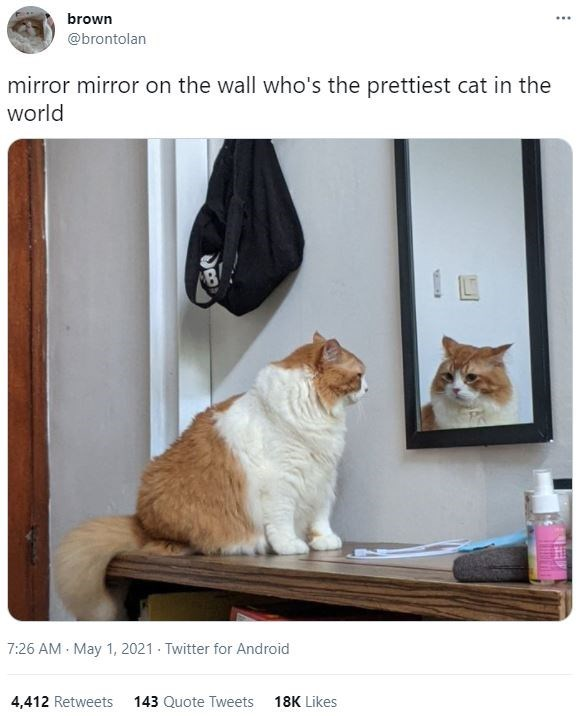 Brown - brown ... @brontolan mirror mirror on the wall who's the prettiest cat in the world 7:26 AM May 1, 2021 - Twitter for Android 4,412 Retweets 143 Quote Tweets 18K Likes