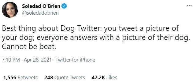 Font - Soledad O'Brien @soledadobrien ... Best thing about Dog Twitter: you tweet a picture of your dog; everyone answers with a picture of their dog. Cannot be beat. 7:10 PM · Apr 28, 2021 - Twitter for iPhone 1,556 Retweets 248 Quote Tweets 42.2K Likes